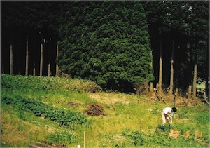 1997年夏 開墾中