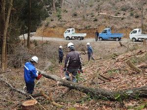 金山里山でコナラを伐採中