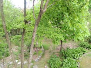 Our beautiful garden1