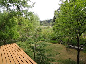 Our beautiful garden2