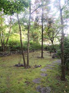 今朝の前庭