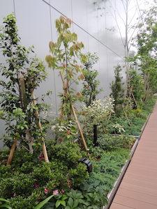 GINZA SIX ガーデン:ウラジロ、ヤブツバキ、クリスマスローズ他