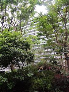 GINZA SIX ガーデン:カツラ、モミジ、ツワブキ他