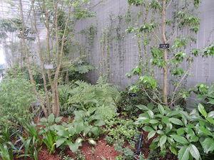 GINZA SIX ガーデン:ソヨゴ、ギボウシ、ヤマブキ、シャガ他