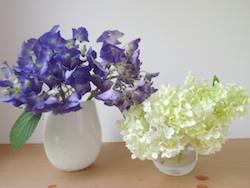 トイレにも紫陽花を