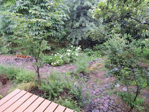2017.7.1雨の朝の庭