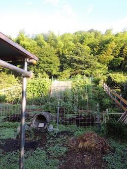 朝陽を浴びる菜園