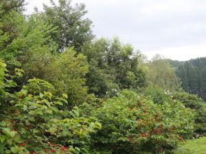 南西側から庭を撮る