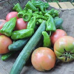 今朝の収穫物です