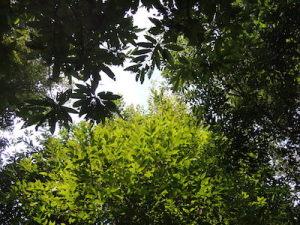 ケヤキ、シラカシ、クリの茂みから見上げる秋空