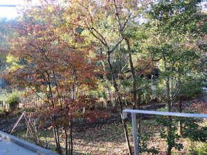 紅葉する庭