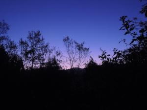 早朝の里山