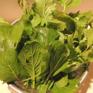 ダイコンの葉と小松菜