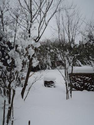 雪に埋まった菜園
