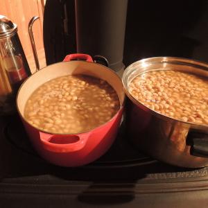 味噌作り用の茹で大豆