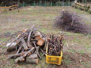 ウワミズザクラを伐採