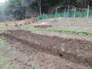 畝作り開始