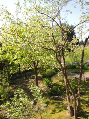 10周年の庭