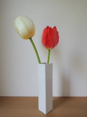 赤と白のハッピーチューリップ