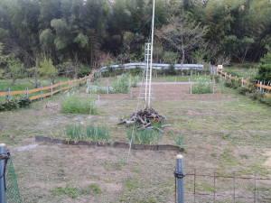菜園の草むしり